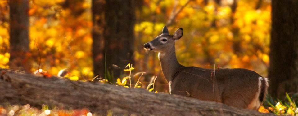 Animale nel bosco
